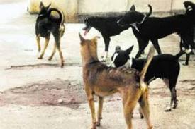 II circoscrizione. Branco di cani randagi semina paura tra i residenti