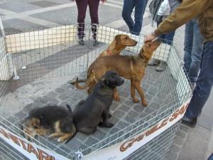 """Cosenza. """"Fido t'affido"""": le adozioni canine tornano in piazza il 9 marzo"""