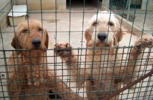 Fido t'affido: primo appuntamento del mese con le adozioni canine in piazza