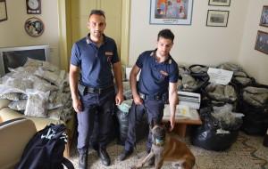 """Catania. Polizia: """"Maxi sequestro di marijuana"""""""