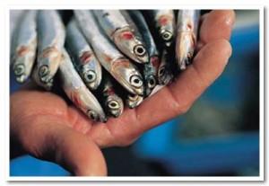pesce-azzurro in mano