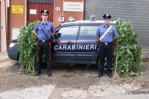 Soveria Mannelli (Cz). I Carabinieri individuano una una piantagione di marijuana