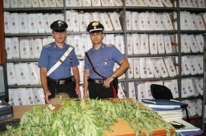 Borgia (Cz). I Carabinieri: un arresto per coltivazione stupefacenti.