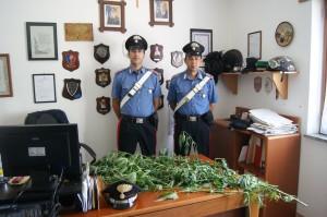 San Michele di Serrastretta: i Carabinieri individuavano una piantagione di canapa indica