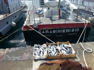 Prodotti ittici sottoposti a sequestro dai Carabinieri