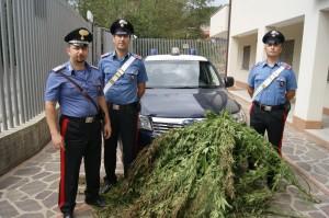 Soveria Mannelli (Cz). Controlli dei Carabinieri: rinvenuta un'altra piantagione di marijuana a Serrastretta.