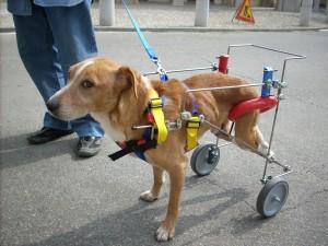 animali disabili carrellini