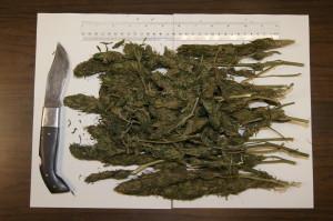 Girifalco (Cz). Un arresto dei Carabinieri per possesso di marijuana e di un coltello con lama di 15 cm