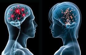 cervello uomo-donna.