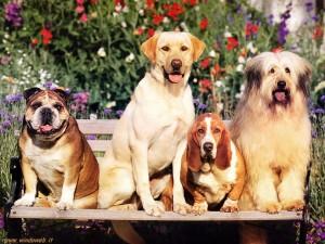 Messina. Scienze Veterinarie: salvata dall'estinzione un'antichissima popolazione canina siciliana