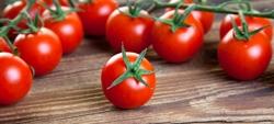 batterio-pericoloso-in-pomodorini-provenienti-dal-marocco