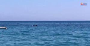 delfini guardavalle