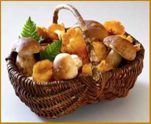 funghi-porcini IN CANESTRO