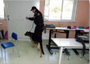 Carabinieri Cinofili scuola