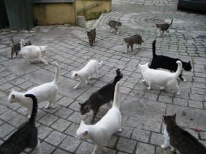 i gatti di Badolato curati da Catherine Risinski 2014