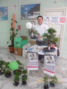 bonsai montepaone 2