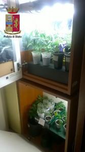 """""""Maria"""" fai da te in casa. La Polizia denuncia a Caronia (Me) coltivatore casalingo di marijuana"""