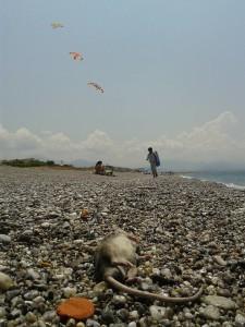 Topi in spiaggia1