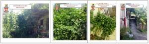Mammola (Rc). Arrestato dai Carabinieri un 50enne  per coltivazione e detenzione di canapa indiana