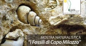 """Messina e provincia. Mostra naturalistica """"I fossili di Capo Milazzo"""""""