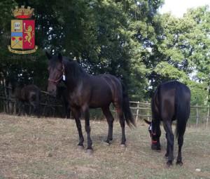 Foto cavalli