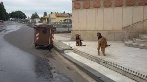 cani cimitero