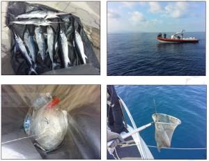 Reggio Calabria. Guardia Costiera: attivita' di contrasto alla cattura illecita di esemplari di pescespada.