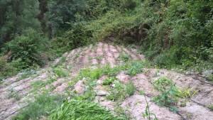 Roccella Jonica (Rc). Carabinieri, un arresto per coltivazione di stupefacenti.