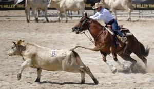 Molise-rodeo-di-Staffoli_980x571