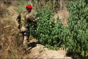 Compagnia Carabinieri Soverato (Cz): otto arresti nel weekend