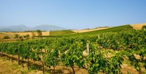 Regione Calabria. In arrivo quarantacinque milioni di euro per gli agricoltori calabresi