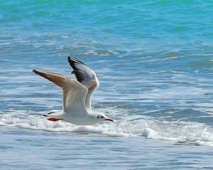 Volare sfiorando le onde il sogno di chi vorrebbe le ali