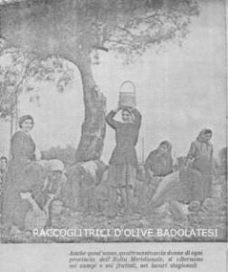 raccoglitrici-di-olive-badolato-anni-cinquanta