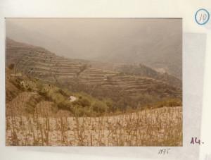 badolato-vigne-di-montagna-1975