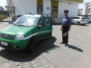 Carabinieri forestale catanzaro