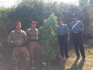 Messina: continuano i rastrellamenti dei Carabinieri nelle aree impervie del Capoluogo. Scoperta una piantagione di canapa indiana – arrestato un 23enne.