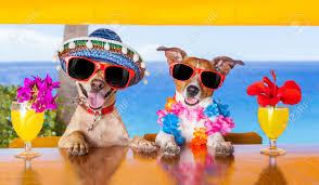 Catania. Nessuna scusa! Adesso il tuo cane può portarti con se al mare!  Evento Dog Beach