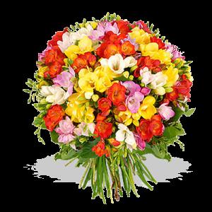 bouquet-multicolori-fiori-della-costituzione