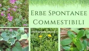 Badolato (Cz). Lunedì di Pasquetta 2 aprile 2018 dedicato al riconoscimento delle erbe spontanee nutrizionali e curative