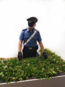 Reggio Calabria. un arresto per detenzione ai fini di spaccio di sostanza stupefacente
