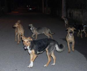 cani-randagi-strade-catania-1