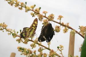 Palermo. Apre la Casa delle Farfalle e la primavera sboccia a San Valentino: dal 14 febbraio nei giardini di Palazzo Riso.