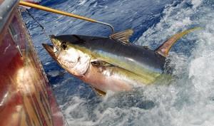 pesca-tonno-1132x670