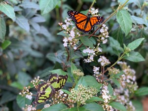 casa-farfalle-palermo-8