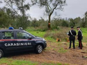 Taurianova (Rc). Due persone arrestate per furto aggravato di legna.