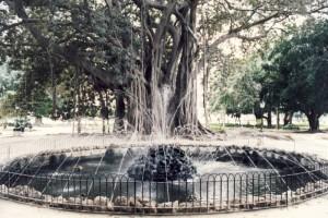 25-ficus-palermo-giardino-garibaldi-piazza-marina-il-piu-grande-di-europa