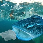8 giugno Giornata modiale degli oceani, nuovo report internazionale WWF sulla plastica: 33 mila bottigliette al minuto nel Mediterraneo