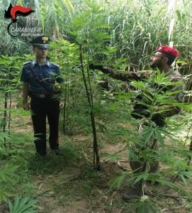 Reggio Calabria. Carabinieri: un arresto per spaccio di sostanza stupefacente detenzione abusiva di munizionamento.