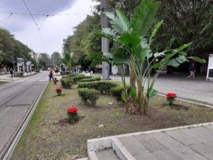 Messina. Interventi di arredo urbano a Piazza Cairoli: nota dell'Assessore Minutoli.