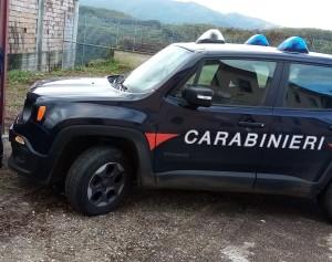 Ardore (Rc). Allevamento di suini irregolare. I carabinieri forestali elevano sanzioni amministrative per oltre 300 mila euro.